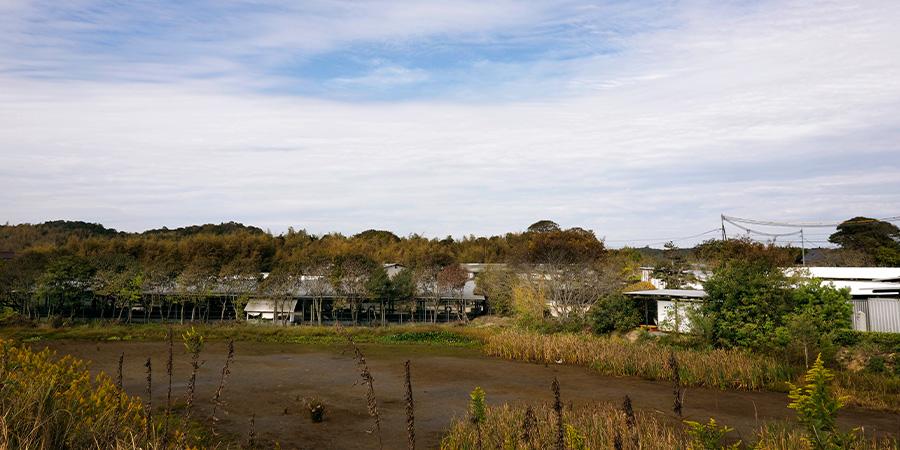 数年前に購入した水田に稲は植えずに夏は水を張り天然のクーラーに